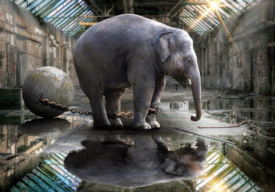 elephant-gdf030c016_1280